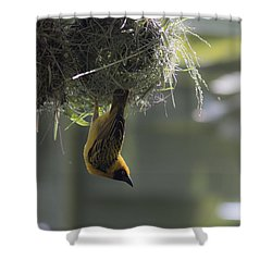 Perfect Weaver Shower Curtain