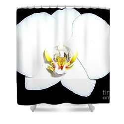 Perfect White Orchid Shower Curtain