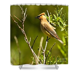 Perfectly Perched Shower Curtain by Adam Jewell