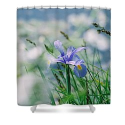 Periwinkle Iris Shower Curtain by Nadine Rippelmeyer