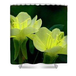Perky Primroses Shower Curtain