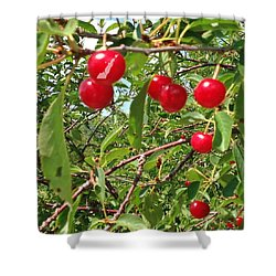 Shower Curtain featuring the photograph Perry's Cherry Image by Perry Andropolis