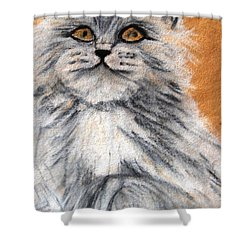 Persian Cat Shower Curtain by Angela Murray