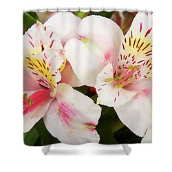 Peruvian Lilies  Flowers White And Pink Color Print Shower Curtain by James BO  Insogna