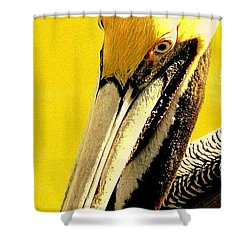 Shower Curtain featuring the photograph Peruvian Pelican by Antonia Citrino