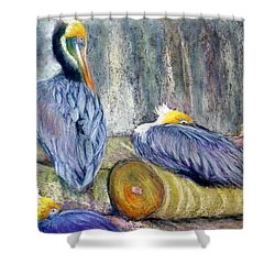 Shower Curtain featuring the pastel Peruvian Pelicans Three Pastel by Antonia Citrino