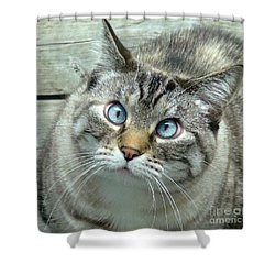 Pet Portrait - Lily The Cat Four Shower Curtain