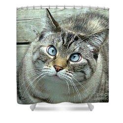 Pet Portrait - Lily The Cat Four Shower Curtain