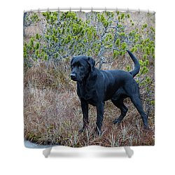 Pet Portrait - Radar Shower Curtain