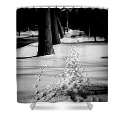 Pet Prints In The Snow Shower Curtain