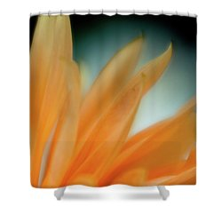 Shower Curtain featuring the photograph Petal Disaray by Greg Nyquist