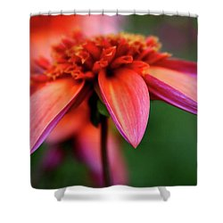 Petal Perfect Shower Curtain by Sheila Ping