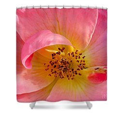 Petal Pink Shower Curtain by Geri Glavis