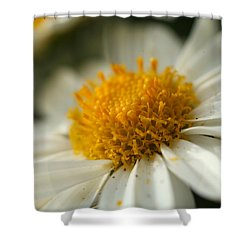 Petals And Pollen Shower Curtain