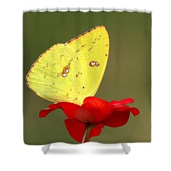 Shower Curtain featuring the photograph Petals And Wings by Sheila Brown