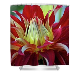 Petals In Red Velvet Shower Curtain by Patricia Strand