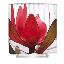 Shower Curtain featuring the digital art Petals by Margaret Hormann Bfa