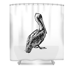 Pete The Pelican Shower Curtain