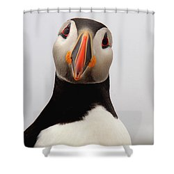 Peter The Puffin Shower Curtain