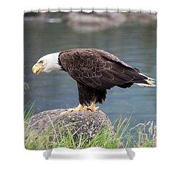 Petersburg Ak Bald Eagle 4 Shower Curtain