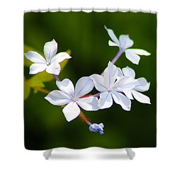 Petite Plumbago Blossoms Shower Curtain