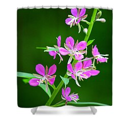 Petites Fleurs Violettes Shower Curtain