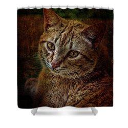 Pets Fat Cat Portrait 2 Shower Curtain