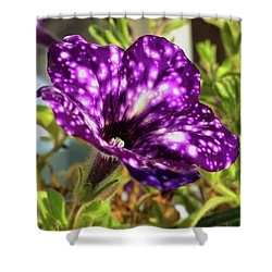 petunia nightsky,Helloween colors  Shower Curtain by Tamara Sushko