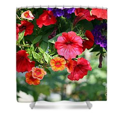 Petunias Shower Curtain by Denise Pohl