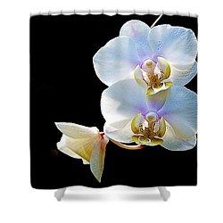 Phalaenopsis Culican #1 Nobby's Amy Shin Hua Shower Curtain