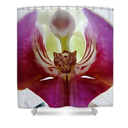 Phalaenopsis Orchid Detail Shower Curtain