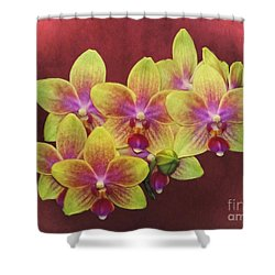 Phalaenopsis Orchid Flower Shower Curtain