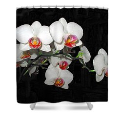 Phalaenopsis Orchids Shower Curtain by Joyce Dickens