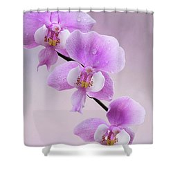 Phalaenopsis Schilleriana Fragrant Butterfly Orchid V2 Shower Curtain