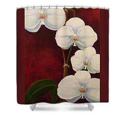 Phaleanopsis Shower Curtain by Anne Marie Brown