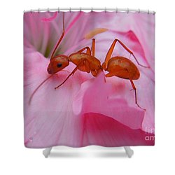 Pharaoh Ant Shower Curtain