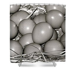 Pheasant Eggs Shower Curtain by Karon Melillo DeVega