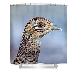 Pheasant Hen Shower Curtain