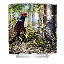 Pheasant In The Forest Shower Curtain