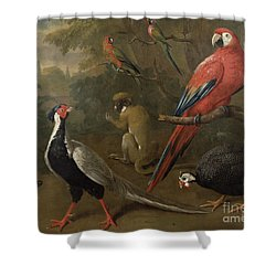 Pheasant Macaw Monkey Parrots And Tortoise  Shower Curtain by Charles Collins