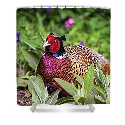 Pheasant Shower Curtain by Martin Newman