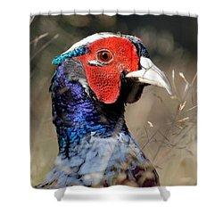 Pheasant Portrait Shower Curtain