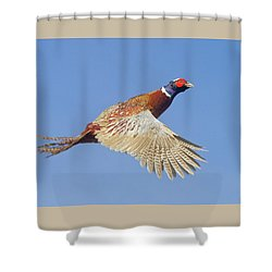 Pheasant Wings Shower Curtain