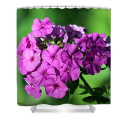 Phlox Shower Curtain