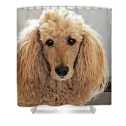 Shower Curtain featuring the photograph Phoebe by Michele Penner