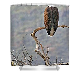 Phoenix Eagle Shower Curtain