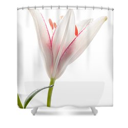 Photograph Of A Pale Lily Opening I Shower Curtain