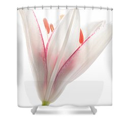 Photograph Of A Pale Lily Opening II Shower Curtain