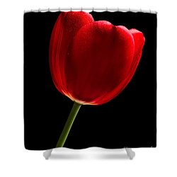 Photograph Of A Red Tulip On Black I Shower Curtain