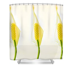 3 Tropical Ladies Called White Anthuriums Shower Curtain